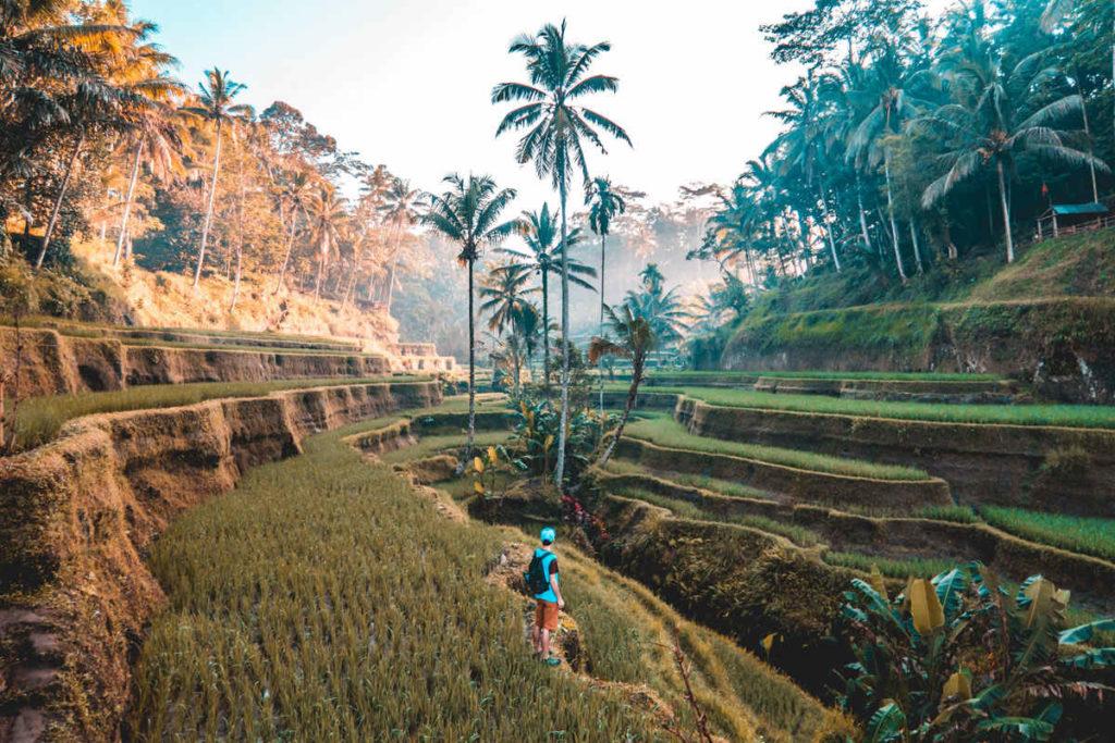 Ortsunabhängig Arbeiten auf Bali