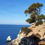 Leben und Arbeiten in Spanien - Mallorca