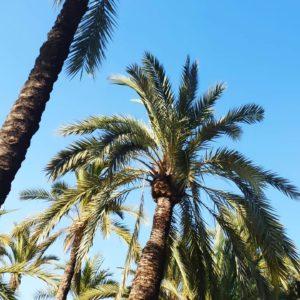 Leben und Arbeiten in Spanien - Palmen im Januar